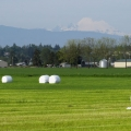 Skagit County Farmland