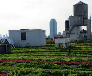 Brooklyn Grange's Flagship Roof Top Farm