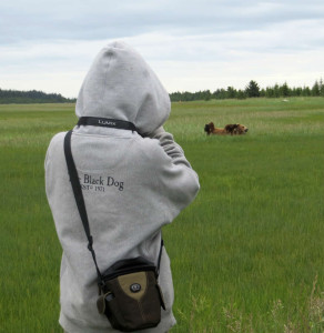 My son photographing the bears