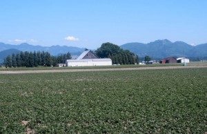 Skagit Farmland