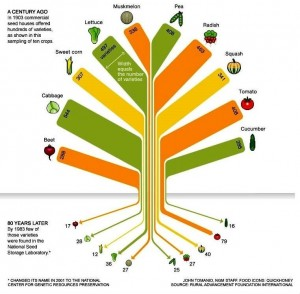 Diminution of Seed Stock over 80 years (prepared by RAFI-USA)