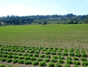 Puyallup Bottomlands Farmland