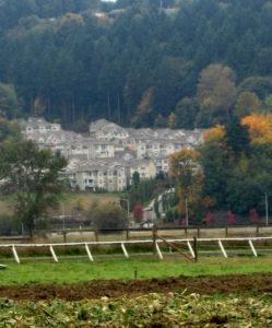 Kent Valley Heritage Farm adjacent to suburban development.