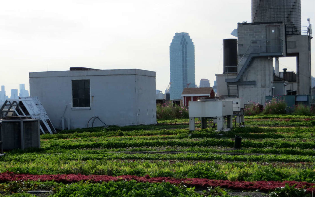 Brooklyn Grange's Edible Green Roof
