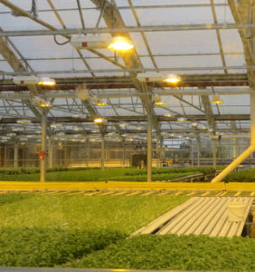 Gotham Greens 20,000 Square Foot Greenhouse