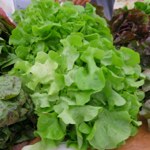 Galisse Lettuce from Let Us Farm