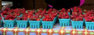 Hayton Farms Strawberrries