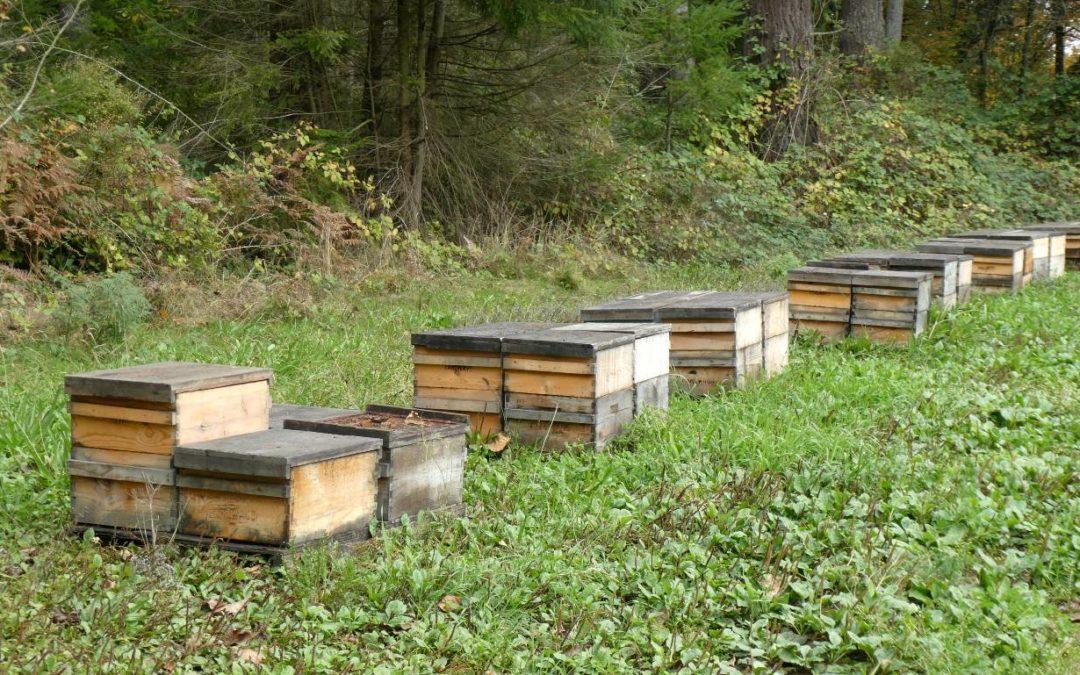 Grandpa's Bees: Growing Seed