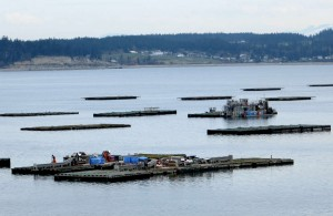 Shellfish rafts and one of the 64-foot custom mussel harvesting vessels