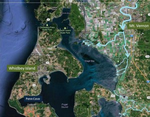 The route of the Skagit and Stilliguamish Rivers that feed Skagit Bay and Penn Cove